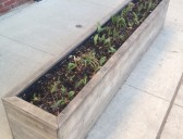 Planter Box Facelift?